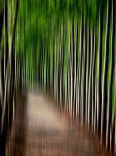 REMEMBERING THE DREAM - Abstract fantasy forest path conceptual 11x14 fine art photography print earth color wall art decor ideas