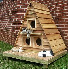 Cat Cottage Triplex with Raised Foundation