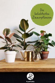 Die 2802 Besten Bilder Von Gemusegarten In 2019 Diy Garten Garten