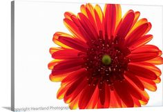 Red Flower Canvas Red Wall Art Red and by HeartlandPhotoBySJW, $65.00