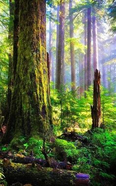 """""""When she looked up, she found herself awed by a world of enscorcelled green. Instead of cerulean, the welkin was now verde, a leafy canopy of foliage sprung entirely from this earthy realm.""""--The Creaking Tree (Marquette)"""