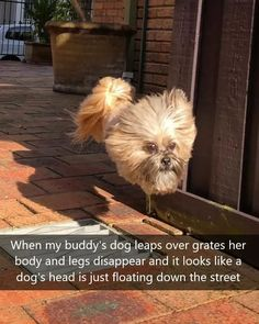 45 Photos Where We See Something That's Not There Memes Humor, Funny Dog Memes, Funny Animal Memes, Funny Animal Pictures, Cute Funny Animals, Funny Dogs, Animal Quotes, Funny Puppies, Meme Meme