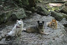 Dogs at Mathesian state park