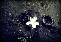 White Flower In Water