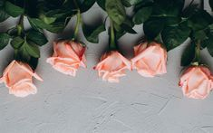 Download wallpapers purple roses, gray background, floral backgrounds, roses, flower buds
