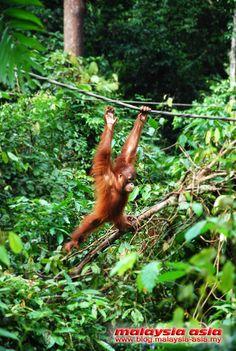 10 Things to do in Sandakan Sabah Borneo - Malaysia Asia