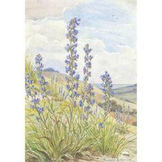Margaret Tarrant - Viper's Bugloss