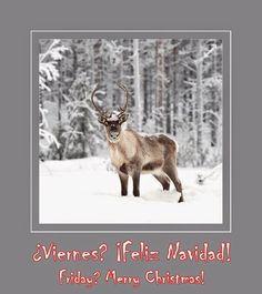 Bon's tips blog: ¡Viernes! ¡Feliz Navidad!   —197