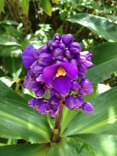 A beautiful flower we found in Cairns Botanical Gardens. Stuff To Do, Things To Do, Daintree Rainforest, Plant Species, Cairns, Tropical Plants, World Heritage Sites, Botanical Gardens, Planting Flowers
