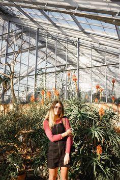 #inspiration #women #summer #spring #life #love Garden Leave, Butterfly Design, Rose Petals, Hd Photos, Indoor Garden, Garden Design, Travel Photography, Backyard, Modern