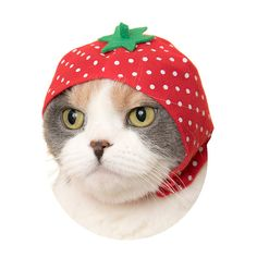 ネコとフルーツが融合 フルーツをモチーフにした可愛いかぶりものが登場 - ライブドアニュース