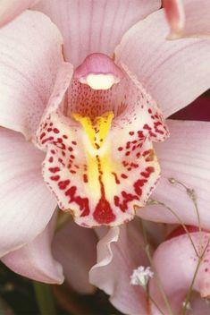 Nobuyoshi Araki, Flowers, 1985-2008 © Nobuyoshi Araki / Courtesy Taka Ishii Gallery.
