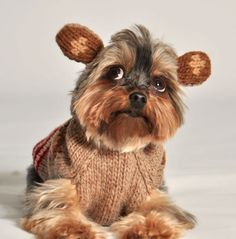Sock-Monkey Dog Sweater with Ears - precious!