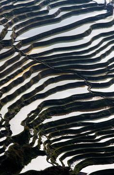 Rice Terraces in Yuanyang district, Yunnan province, China | 17 Unbelivably Photos Of Rice Fields. Stunning No. #15