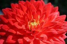 Google Image Result for http://mdb7.ibibo.com/04153616c7465645f5f9e6f135d6965cfaa890616ddc44b2dd618dd2e50c274e0dcb28047a8b1fc29cfb59b5f71a465e460c0e50f.jpeg/sep-nature-flower-colour-color.jpeg