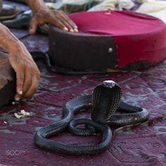 Encantador de serpientes. - Encantador de serpientes en el Mercado de Marrakech. Marrakech, Snake, Snakes, Places To Visit, A Snake
