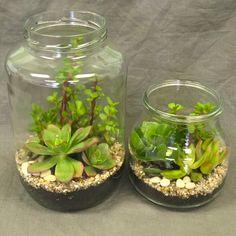 Terrarium - Buy Flowers - Chill Flowers