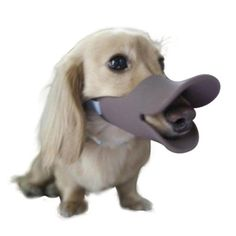 Lovely summer Anti Bite Duck Mouth Shape Dog Mouth Covers Anti-called Muzzle Masks Pet Mouth Set Bite-proof ** Learn more by visiting the image link. (This is an affiliate link and I receive a commission for the sales)