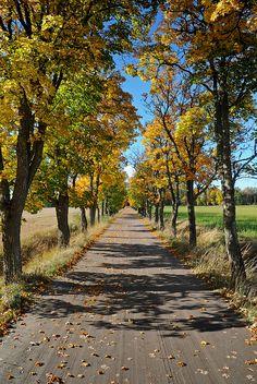 Autumn dirt road in Sweden