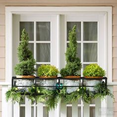 A wrought-iron planter holder features miniature dwarf spruce and other evergreens for a Christmas treelike display. Enhance the arrangement by adding glass ball ornaments and fresh-cut boughs of cedar and pine into the mix.