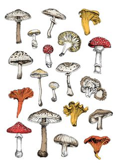 Fungi | rePinned by CamerinRoss.com