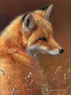 Google Image Result for http://www.jonijohnsongodsy.com/images/originals/0051-red-fox.jpg