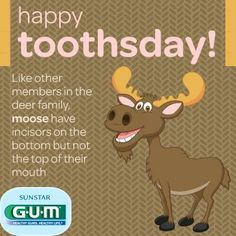 Happy Toothsday!