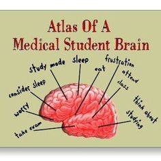 medical student brain