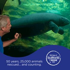 Meet Holly! She was rescued nearly 20 years ago but needed long-term rehabilitation before she could return to the wild. After moving from SeaWorld to the Columbus Zoo, she was brought back to SeaWorld for final preparation for her return to the wild! Read all about Holly here: http://bit.ly/1KJuhZW #365DaysOfRescue