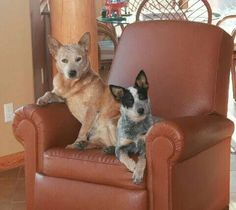 We saw you petting the neighbors dog....do you want to sit down & talk about it!!!!!!!!