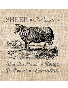 Digital download image Vintage sheep French breeds by graphicals, $1.00