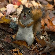 This looks like the squirrel in my backyard fussing at my dogs.