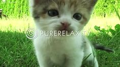Relaxation For Children - Music for Learning, Quiet, Positive, Harmony - PURE RELAX - quiet music - music. Music For Kids, Yoga For Kids, Children Music, Relaxing Gif, Relaxing Music, Cute Kitten Gif, Kittens Cutest, Brain Break Videos, Calming Music