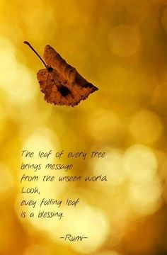 ....every falling leaf is a blessing. - Rumi