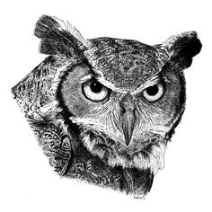 Great Horned Owl Pen and Ink Drawing