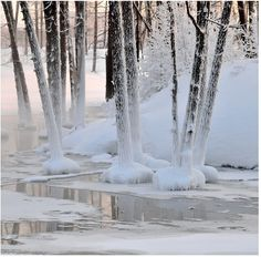 Frozen trees.