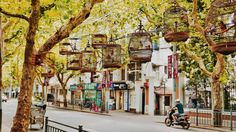 Sustainable Streets- 9 Benefits of Planting Trees In Urban Cities