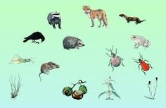 Food web, interactive