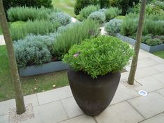 Surrey B | Projects | Richard Miers - Garden Design