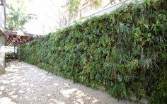 plantas indicadas para jardim externo - Pesquisa Google