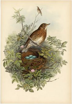 Gorgeous Bird with Nest and Eggs Printable