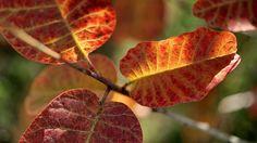 Planter un arbre à chaque naissance : un symbole de vie et de longévité ! Arbre fruitier dans le potager, arbre dans la forêt, sapin ou feuillu, ar...