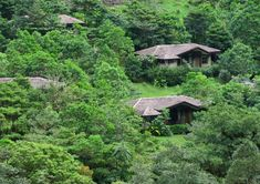 El Silencio Lodge & Spa Bajos del Toro, Costa Rica Country Eco Exterior Lodge Mountains Rustic Scenic views Wellness tree habitat vegetation wilderness rainforest natural environment ecosystem Forest Jungle old growth forest woodland rural area lush hut biome Garden wooded hillside surrounded