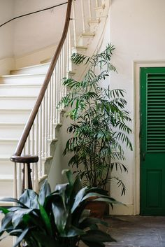 Green by the stairs