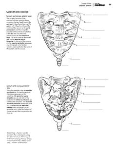 Kaplan Anatomy Coloring Book.pdf | boudli | Pinterest | Anatomy ...