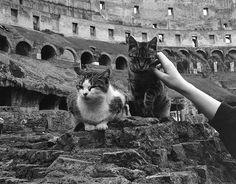 Roman cats