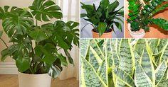 Plantas de interior que necesitan poca luz - https://jardineriaplantasyflores.com/plantas-de-interior-que-necesitan-poca-luz/