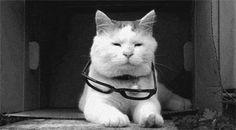 13 razones convincentes para tener un gato en casa