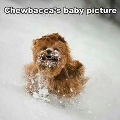 Chewbaca!