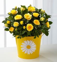 Sunshine Spirit Mini Rose - 6.5-inch  http://www.3wishesfloral.com/product/sunshine-spirit-mini-rose-6-5-inch/display